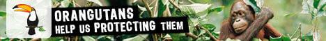 Banner: Orangutans - Help us protect them