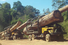 Trucks smuggle illegal timber into Vietnam.