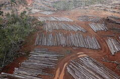 Deforestation for PT Digoel Agri oil palm plantation in Papua