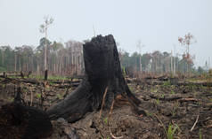 Slash-and-burn clearing in Indonesia
