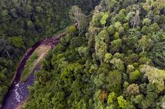 Aerial view of a river in the Leuser Ecosystem