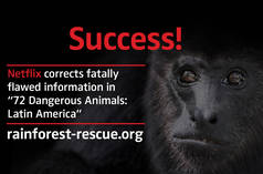 "Black howler monkey (Alouatta carayá)  with text ""Success!"""