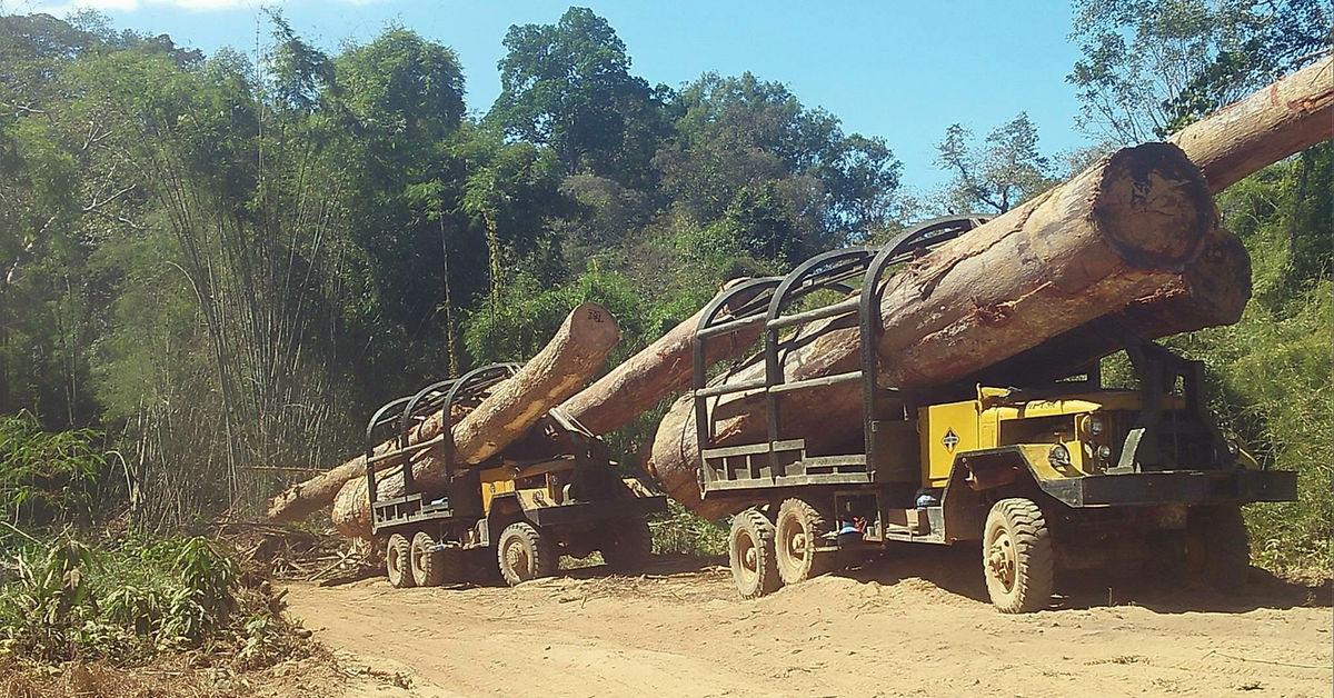 លទ្ធផលរូបភាពសម្រាប់ vietnam cuting forest