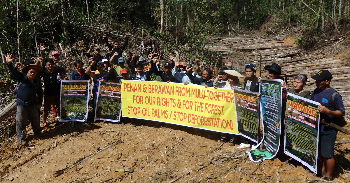 Malaysia: slashing Sarawak's forests for palm oil - Rainforest Rescue