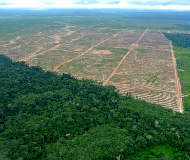 Aerial view of a clearing for oil palms in Peru
