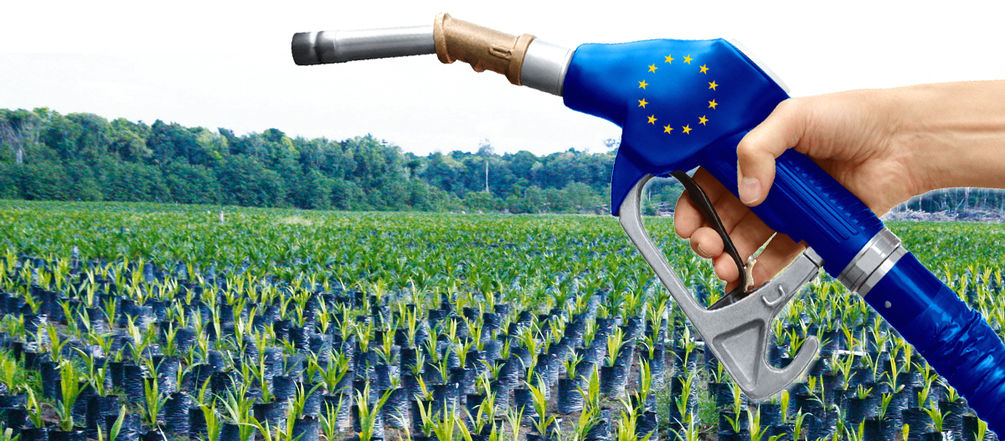 EU palm oil biofuel