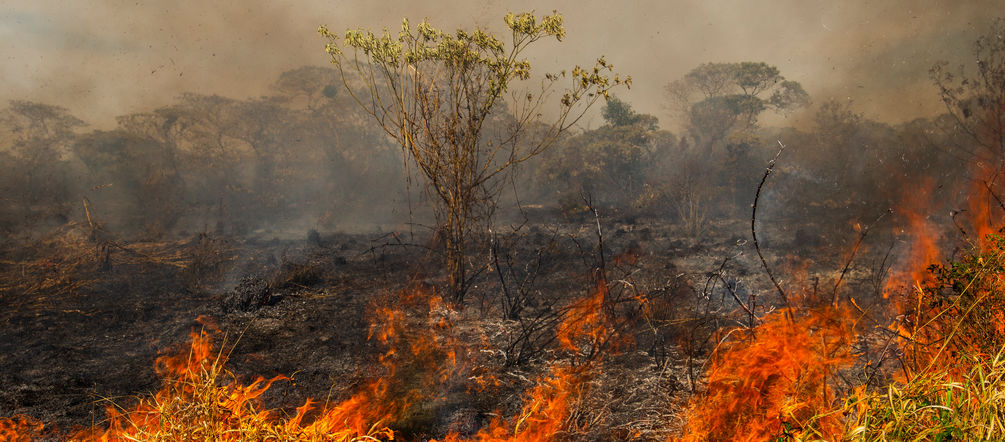 Forest fire in Brazil