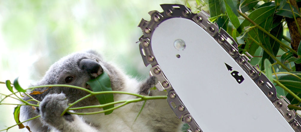 Photomontage: koala and chainsaw