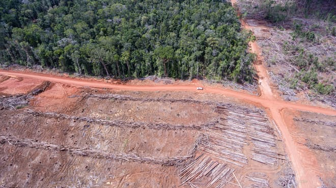Aerial view: clearing forest for Korindo oil palm plantations in Papua
