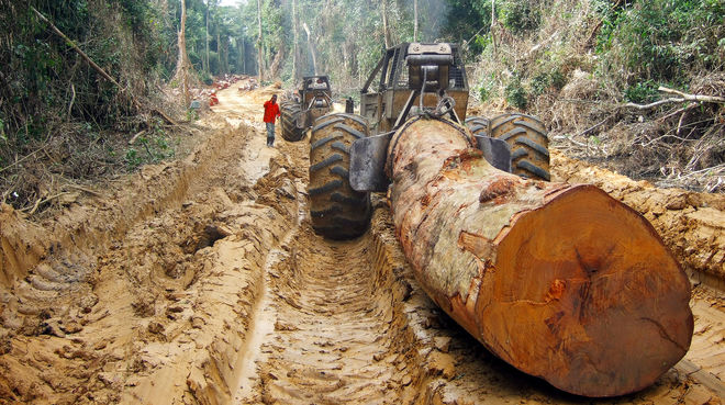 A huge tree is pulled with a skidder in a tropical rainforest in Central Africa