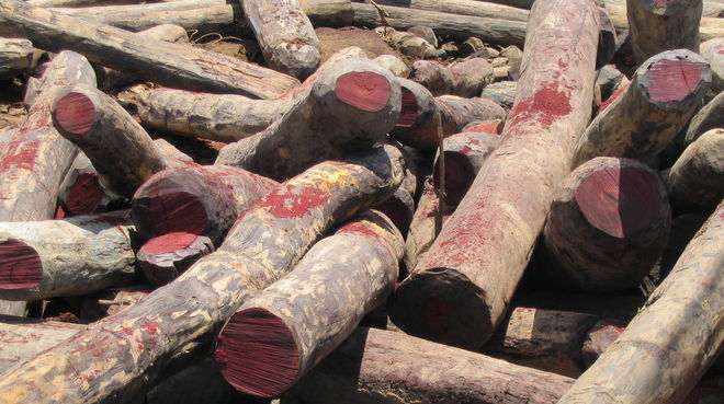 Illegally logged rosewood in Madagascar