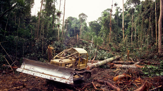 Bulldozer in forest