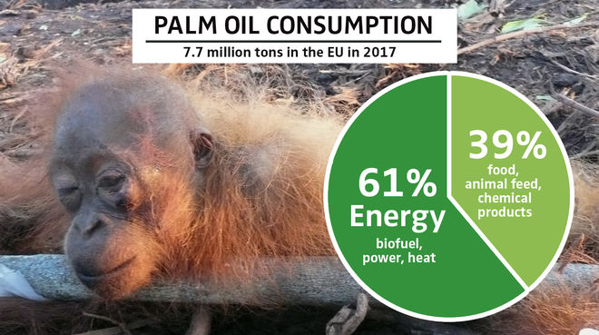 PALM OIL CONSUMPTION 2017