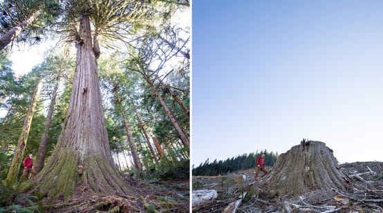 Clear-cutting of coastal rainforest on Vancouver Island, British Columbia