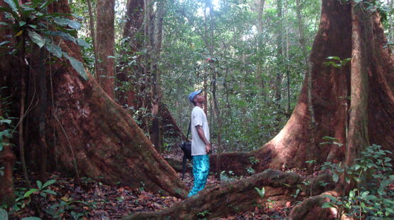 Man between big trees in Cameroon