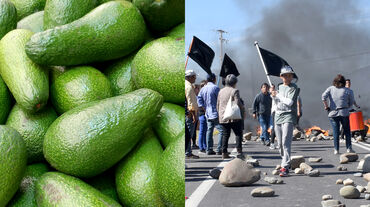 Montage: avocados (l.), protests in Chile