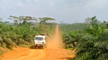 A truck driving through an oil palm plantation in Liberia