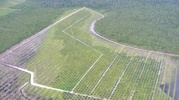 Kalimantan oil palm plantation