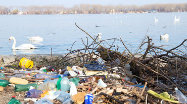 Plastic waste on the banks of the Danube and swans on the water