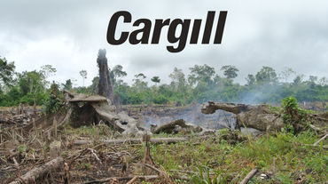 Torched forest and Cargill logo