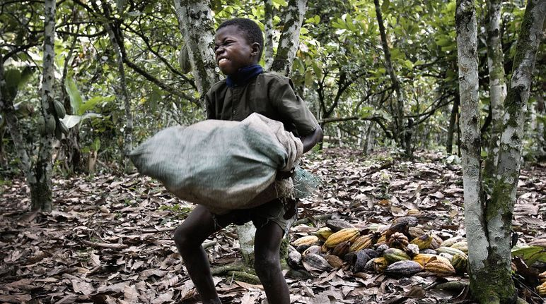 Child laborer on cocoa plantation, Ivory Coast