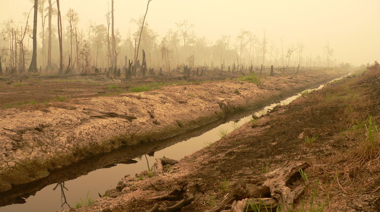 Peat bog forest cleared for the million-hectare rice project in central Kalimantan