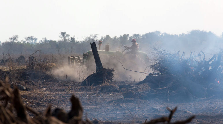 Time's almost up  Tell the EU to act on deforestation now