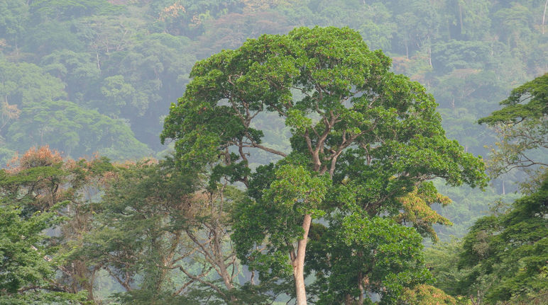 Rainforest in Nigeria