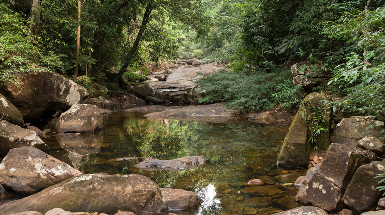 Boulder-lined watercourse surrounded by tropical forest