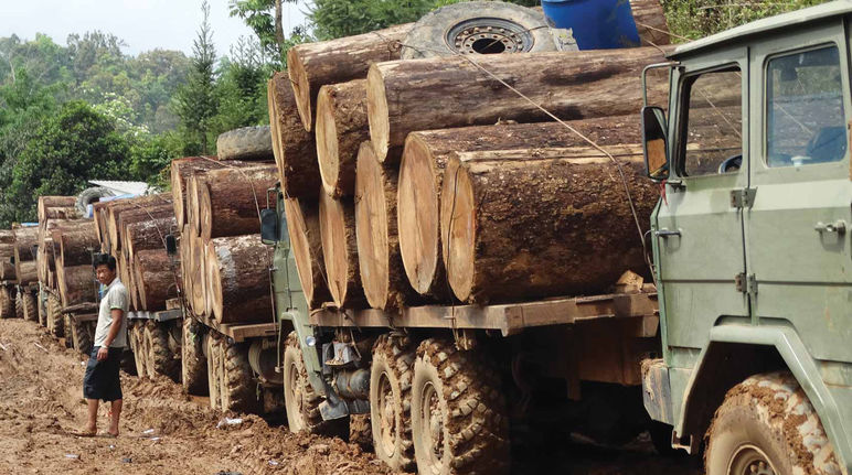 Myanmar: logs on trucks