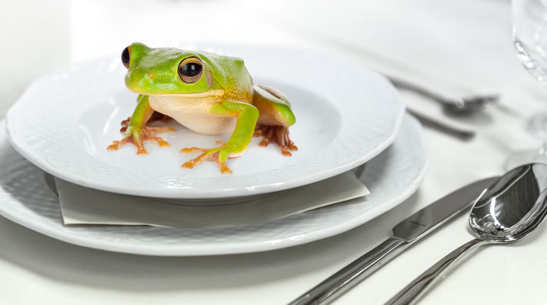 Frog on a plate