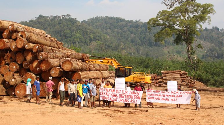 Indigenous people protesting in front of logs from felled rainforest trees