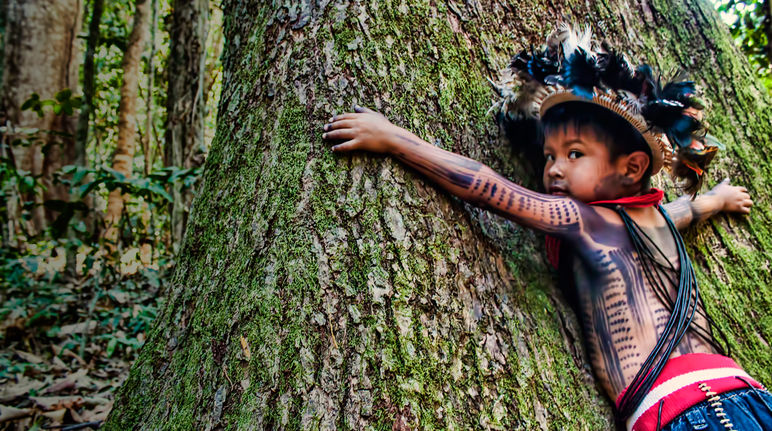 A Cry For Help From The Amazon Rainforest Rainforest Rescue