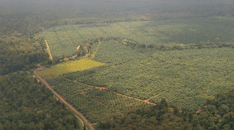 Aerial view of forest and oil palm plantations