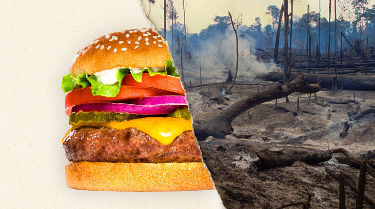 A two-part image – on the left a burger, on the right a clear-cut rainforest