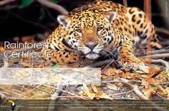 rainforest donation certificates rainforest rescue