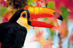 A tucan in midst of colourful flowers
