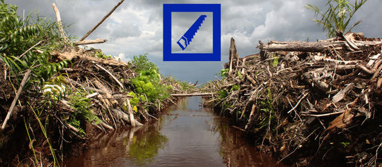 Freshly cleared rainforest. The Deutsche Bank logo is superimposed on the picture.