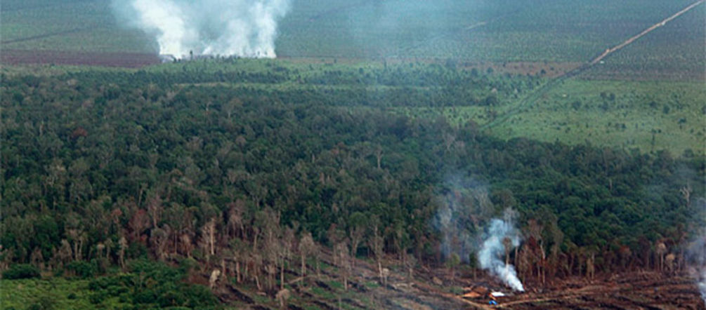 Aerial photograph of a burning rainforest