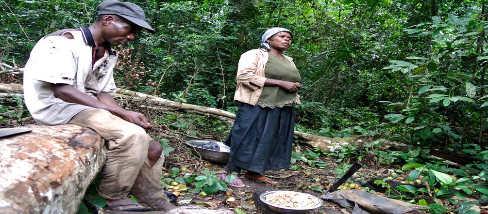 Nigerian woman gathering forest mangos