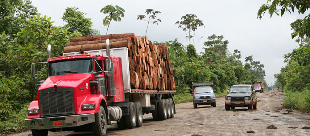 Truck loaded with timber in the rainforest