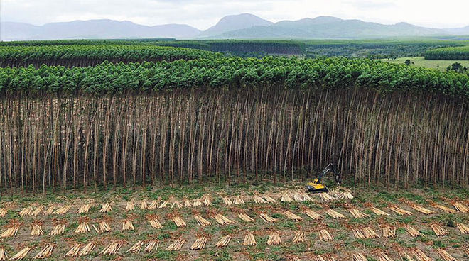 tell the united nations plantations are not forests rainforest