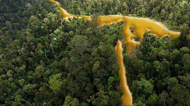 A river of gold is flowing through the rainforest