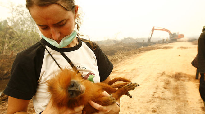 Karmele Llano is holding a primate whose rainforest has been destroyed for palm oil