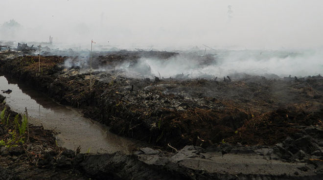 Haze and fire on drained peatland at the Pt PEAK plantation, Katingan, C-Kalimantan