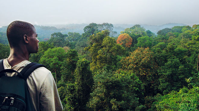 A man looking out across the rainforest canopy