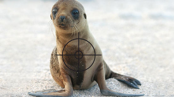 A sealion with a target on it´s chest