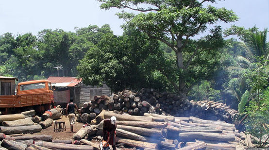 Illegally logged wood near the Masoala National Park in Madagascar.