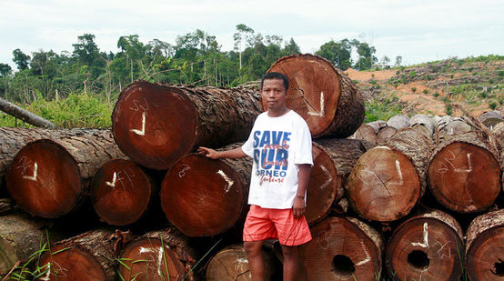 Nordin from Save Our Borneo in front of logs which have been illegally logged for palm oil plantations