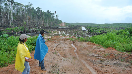 Two farmers look toward a clearing to be planted with oil palms.
